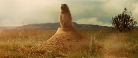 Marmotta