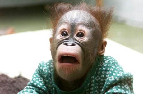 scimmia stupita